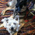 Our dogs Heine and Frieda