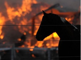 Horse + Fire