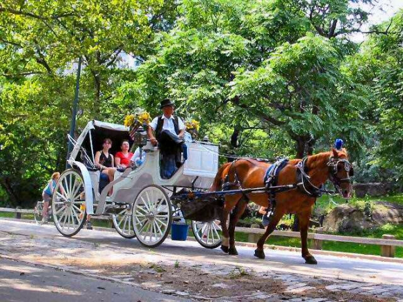 horse-and-carriage-central-park-580x435