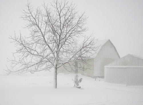 Barn In A Blizzard